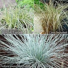 hardy ornamental grasses collection x 6 plants in 3 colours