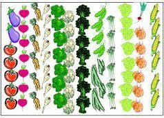 garden layouts picmia