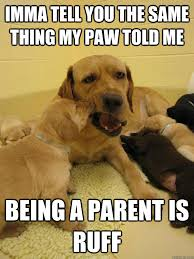 Being A Parent Meme - seasoned parent dog memes quickmeme