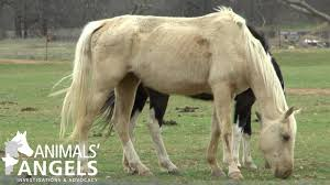 Texas Sale Barn Bowie Horse Sale Bowie Tx 3 6 16 Animals Angels North America