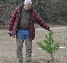 a lebanon family tradition christmas tree farm one of the last of