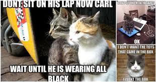 Sassy Cat Meme - pictures that demonstrate kooky cat logic hitsharenow