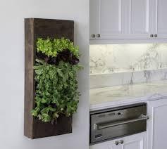 modern kitchen with wooden planter for indoor herb garden easy