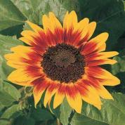best garden flowers for color all summer this old house