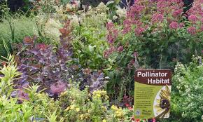 native plants ohio 2017 demonstration garden 2nd place u2013 pollinator garden at dawes