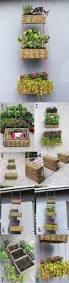 199 best indoor gardening ideas images on pinterest gardening