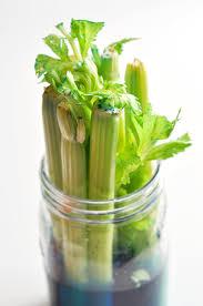 science experiment celery u0026 food coloring