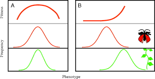 the evolutionary consequences of ecological interactions mediated