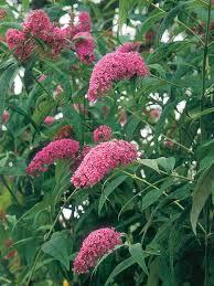 create a butterfly garden hgtv