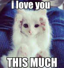 I Love You This Much Meme - i love you funny pictures quotes memes funny images funny