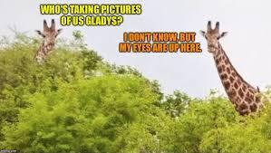 Giraffe Hat Meme - why guys trim their pubes giraffe meme generator imgflip