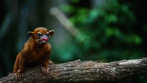 Tropical Dry Forest Animals And Plants - animals that live in the tropical forest that are omnivores