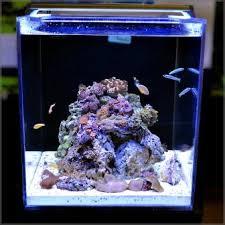 high output led lights amazon com finnex ray2 aquarium day actinic led light 36 inch