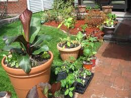 Vegetable Container Garden - vegetable container garden picture gallery of backyard container