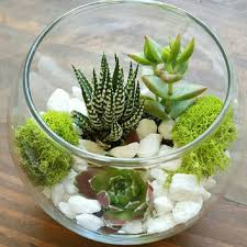 best round glass terrarium products on wanelo