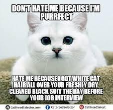 Business Cat Memes - inspirational 23 business cat meme wallpaper site wallpaper site