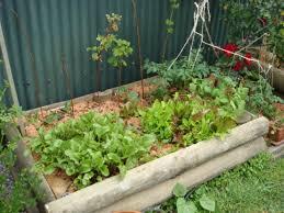 exclusive beginner vegetable garden remarkable decoration planning