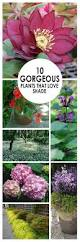 homelife 10 best plants for vertical gardens shade loving flowers australia clanagnew decoration