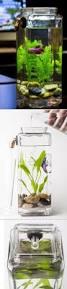68 best water plants images on pinterest plants indoor water