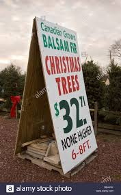 christmas trees for sale sign stock photo royalty free image