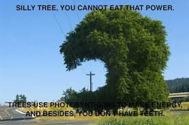tree no eat power