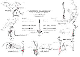 Anatomy Directional Terms Worksheet Anatomy Of Mammals Image Collections Learn Human Anatomy Image
