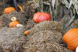 free images food produce pumpkin halloween gourd straw