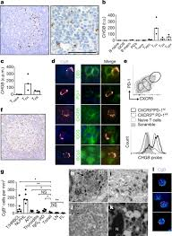 tfh derived dopamine accelerates productive synapses in germinal