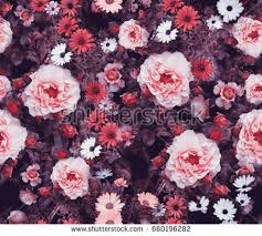 real flowers real flowers stock images royalty free images vectors