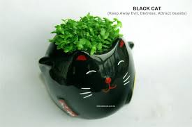 Cute Plant by Ceramic Fortune Cat Pot Plant Pit End 11 25 2017 9 58 Am