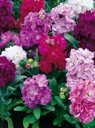 Climbing Plants That Flower All Year - 17 annual flowers for year round color hgtv