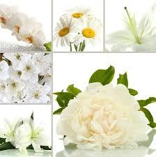 fleurs blanches mariage un mariage à fêter faites livrer des fleurs blanches