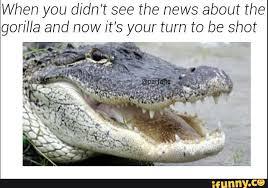 Gator Meme - featured ifunny