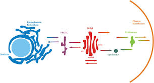 biological membranes essays in biochemistry
