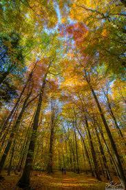 autumn sunbeam fall color explained michigan pictures