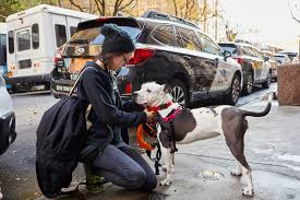 subaru black friday sale 2017 subaru encourages dog lovers everywhere to enjoy the great