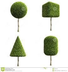 green decorative shrubs or trees stock illustration image 46048156
