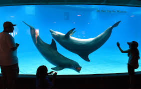 national aquarium will move dolphins to a sanctuary by 2020