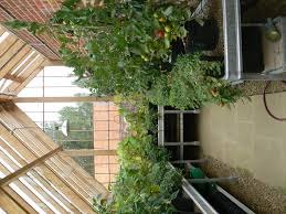 bench greenhouse benches uk greenhouse benches and shelving
