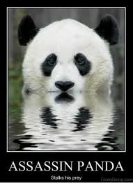 Cute Memes - 80 cute panda memes