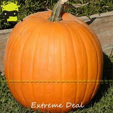 free halloween farm background online buy wholesale farm halloween from china farm halloween