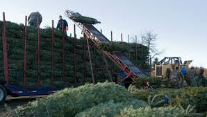 christmas on the farm a how to for christmas tree growers