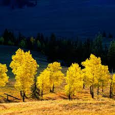 Colorado Fall Colors Map by Top 18 Spots For Fall Color Sunset