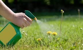 use vinegar as a natural weed killer
