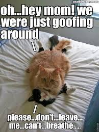 funny kitties kitty favorites pinterest kitty cat and animal