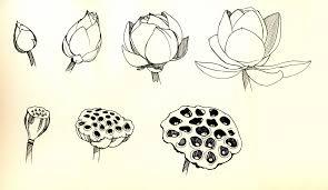 14 lotus flower tattoo pictures 68 best spiritual tattoos