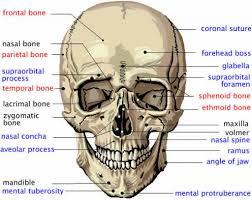 3d Human Anatomy 3d Human Body List Of Bones Human Anatomy Labelled