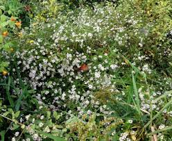 Shrub Small White Flowers - wildflowers new hampshire garden solutions