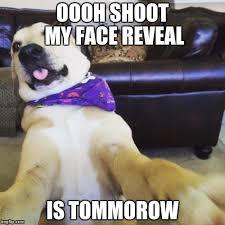 Funny Dog Face Meme - funny dog meme blank template imgflip