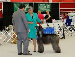 afghan hound club of st louis afghan hound club specialty st louis jhansgraphics jan henry